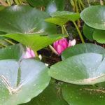 Blütenpracht 5 ©by hoschkat
