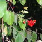 Blütenpracht 6 ©by hoschkat
