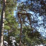 Waldimpression ©by hoschkat