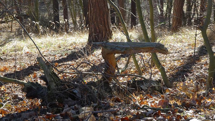 mystischer Waldbewohner ©by hoschkat