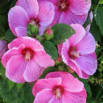 Blütenpracht ©by hoschkat