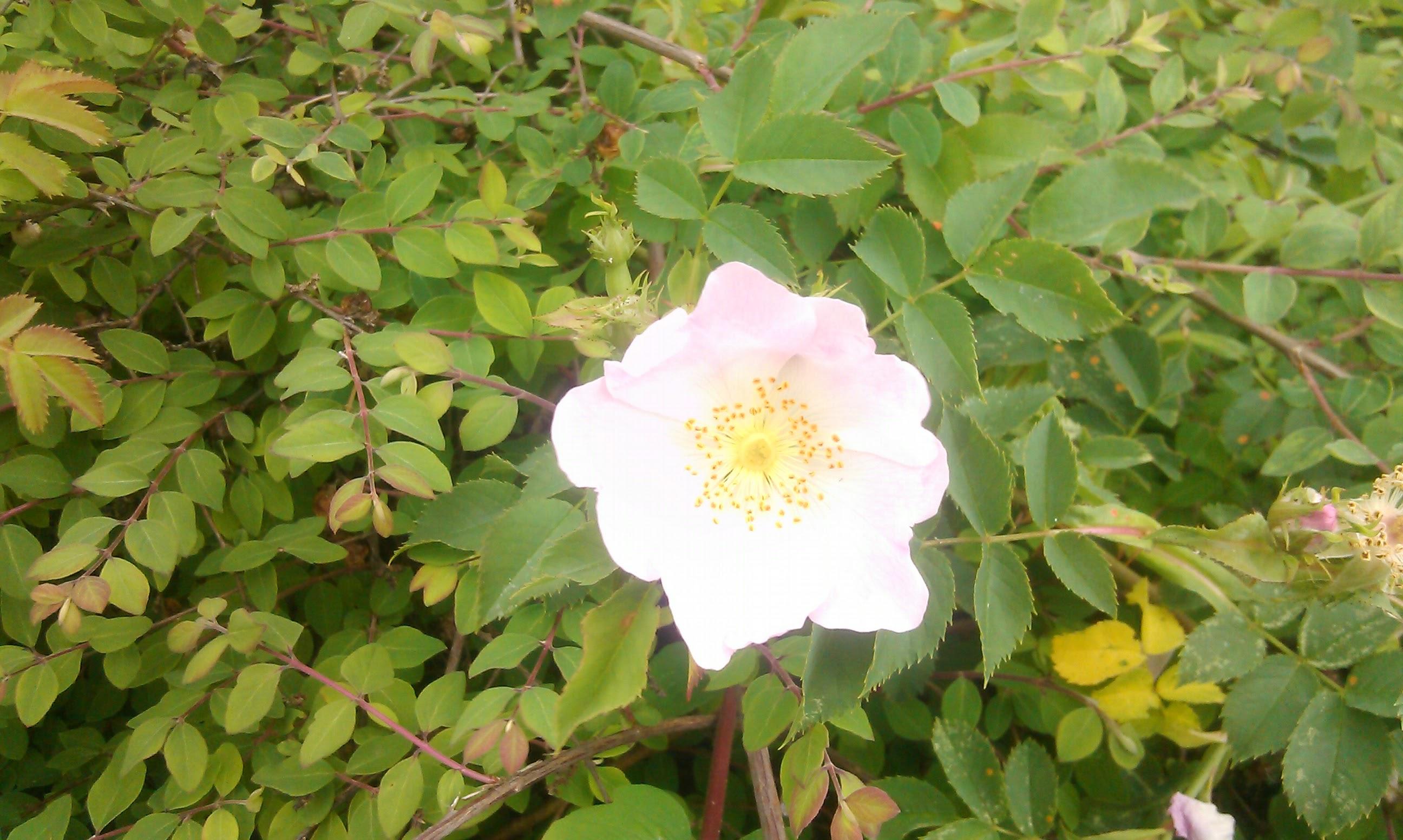 Blütenpracht 2 ©by hoschkat