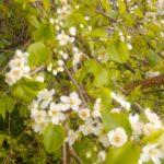 Blütenpracht 4 ©by hoschkat